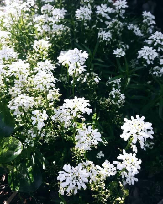 flowers-in-a-garden